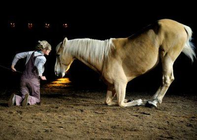 A_quoi_revent_les_chevaux_la_nuit2